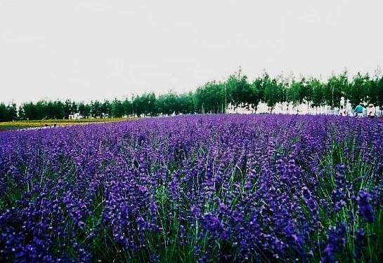 散策コースは6月から10月~大雪山 旭岳~(北海道)