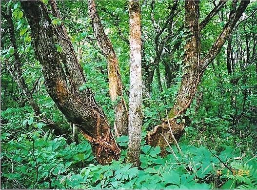 原生林の中を藪こぎ