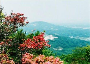 山ツツジが見ごたえの~高柴山~(福島)