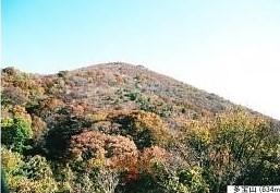 中段より弥彦山頂