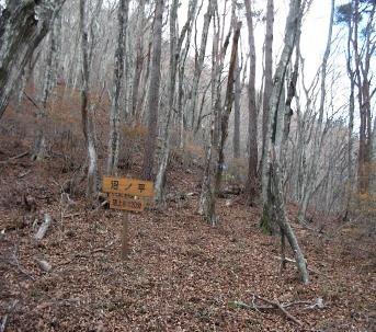 閑静な雑木林