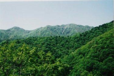 頂上一帯はブナの原生林~新保岳~(新潟)