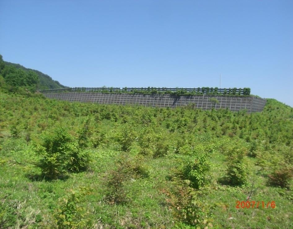 山麓には多くのブナの植林がされていた