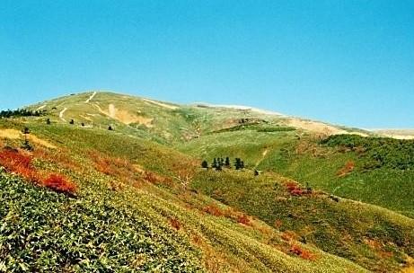 雲一つない草紅葉の中に点々とシラビソ