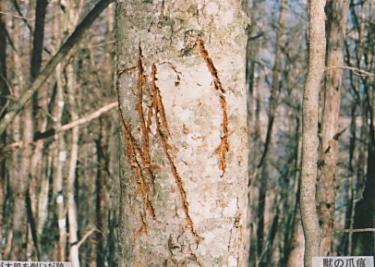 野生動物達の痕跡を辿りながら自然を楽しむ山~後蔵~(山梨)