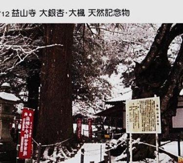 益山寺・大銀杏・大拳 天然記念物