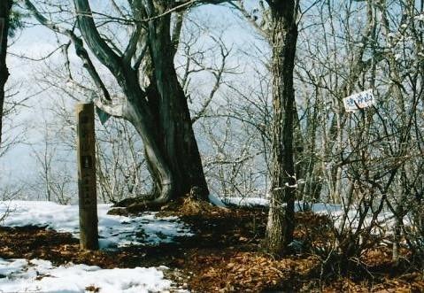 大木も林立する達沢山 山頂