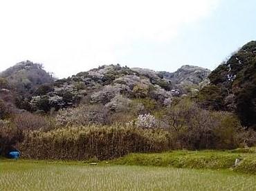 中央 白石山
