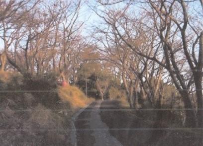 桜並木を登って行く