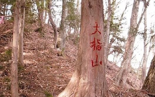 大指山と書かれた杉 この上が山頂