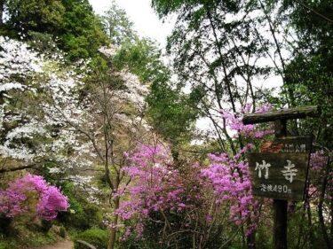 埼玉の3山でお花見登山を楽しむ~竹寺・楢抜山・大仁田山~(埼玉)