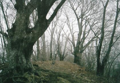 原生林の霧