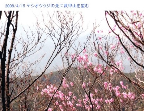 ヤシオツツジの先に武甲山を望む