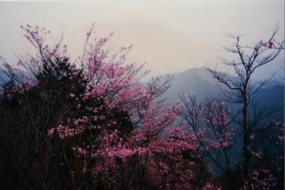 前日光方面の山並み