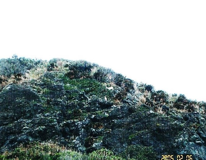 中央の山肌に野生のヤギを見た。白い生き物二点