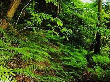 関東近郊で森林浴はいかがですか?三浦アルプスの最高峰・茅塚(神奈川)