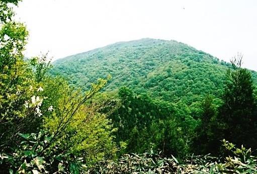 鳥越峠から金糞岳を望む
