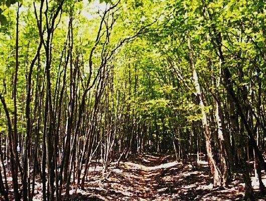 気持ちのよい落葉混生林を行く