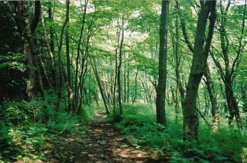 気持のよい雑木林の中を行く