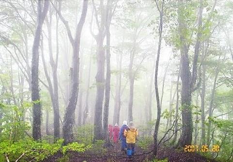 濃霧の中のブナ