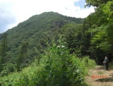 山道より高反山が顔を出す、㊧伐採緩傾斜