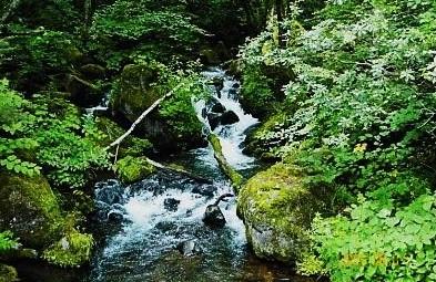 信州・八千穂高原・自然園|飛竜の滝