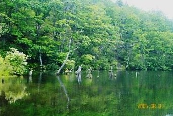 信州・八千穂高原・自然園|遊亀湖